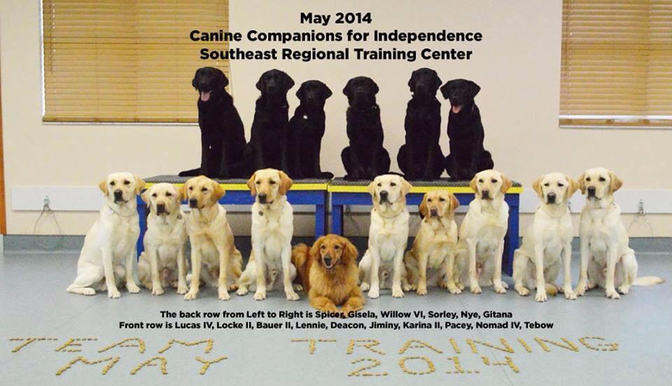 The dog candidates