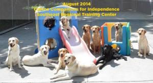 Service dog candidates